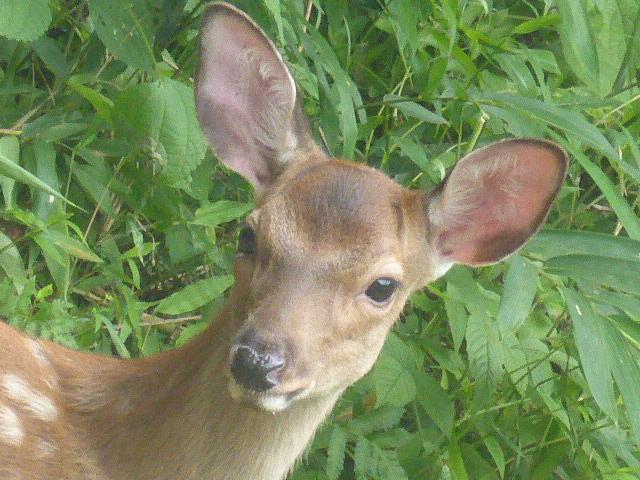 かわいい鹿さん