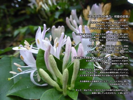 スイカズラの香り・初夏の記憶